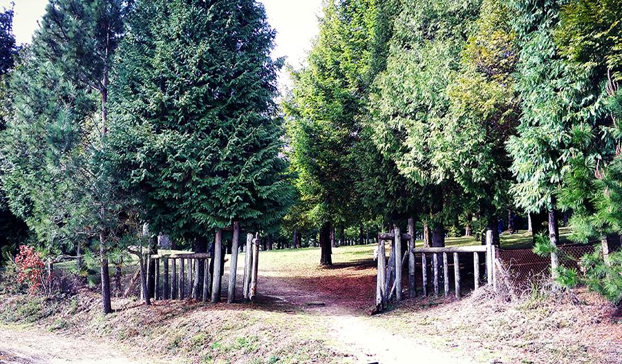 A maior floresta de sequóias na Europa